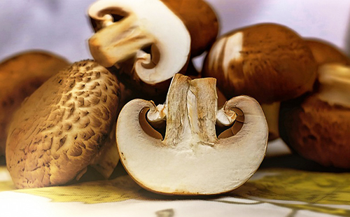 Коричневый гриб разрезан пополам