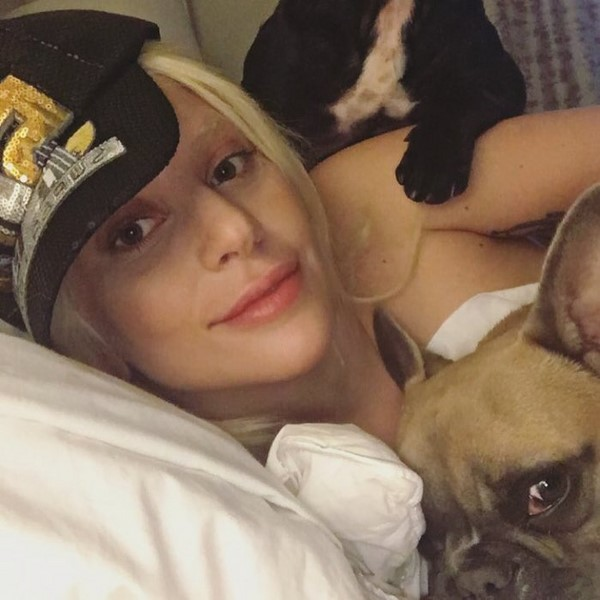 Звезды в постели: эпатажная Леди Гага в кровати - милая и домашняя, в компании своих питомцев