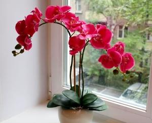 что делать со стрелкой, если орхидея отцвела